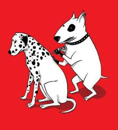 Being a Dalmatian takes courage... haha!
