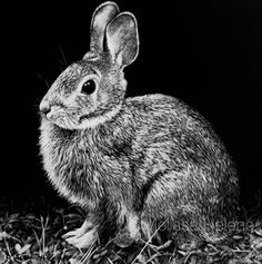 Bunny | Melissa Helene Fine Arts + Photography www.melissahelene.com 5x5 #scratchboard #wildlife #artwork #bunny #blackandwhite