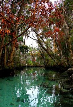 Fall colors along the Three Sisters Spring in Florida