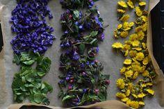 Ak si tieto bylinky nenazbierate teraz, už sa k nim tento rok nedostanete! | Záhrada.sk Plants, Plant, Planets