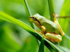 この日は朝雨が降っていたせいか、草の上を歩くと若い雨蛙達がピョンピョン逃げ回っていた。 &nbs…