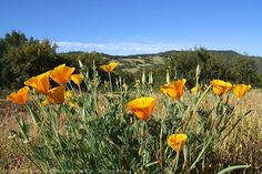 #ridecolorfully  stop and smell the flowers.  Cleveland National Forest In Southern California