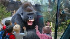Kids and wild animals At The Zoo: Rainforest Animals and African animals Gorilla will appear in Hi By happy time when we are at the zoo and get to see the wild animals at there. In this video there are wild animals Rainforest Animals, Zoo Animals, Animals And Pets, Funny Animals, Cute Animals, Animals Amazing, Small Animals, Animals Beautiful, Wild Animals Attack