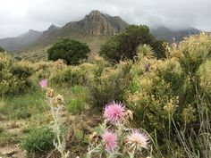 Guadalupe Mountains National Park..will always be my dream to hike it with you❤️
