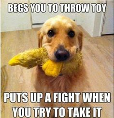 Hundreds of Funny and Adorable Dog Pictures, Dog Memes and yes Dog Shaming! It ends up that Man's Best Friend is as funny as they are loyal! Funny Dog Memes, Funny Dogs, Cute Dogs, Silly Dogs, Pet Memes, Dog Funnies, Funny Quotes, Dog Humor, Dog Quotes