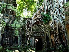 海外旅行世界遺産 タ・プローム アンコール遺跡群の絶景写真画像ランキング  カンボジア