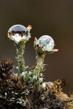 """Two Towers"" by Jiří Míchal, Lichen All Nature, Science And Nature, Amazing Nature, Nature Plants, Sea Plants, Amazing Art, Plant Fungus, Fotografia Macro, Dew Drops"