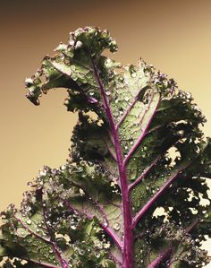 Beautiful kale