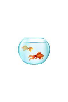 20 Types of Goldfish for Aquarium (Oranda, Shubunkin, Bubble Eye, Etc) Lionhead Goldfish, Fantail Goldfish, Goldfish Types, Goldfish Aquarium, Goldfish Pond, Fish Vector, Vector Art, Veiltail Goldfish