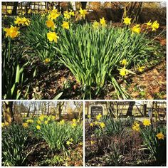 A gorgeous sunny day here on Water Hall Farm #dentondrapes #spring #flowers