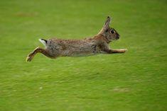 Rabbits unearth a trove of New Stone Age treasure at Land's End