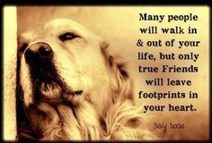 True #friends. #truth #dogs #love