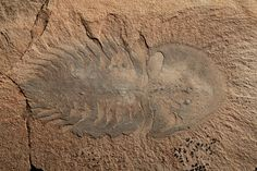 Largest Assemblage of Cambrian Fossils Since 1909 Discovered in ...