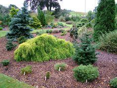 Foxhollow, výhled do zahrady