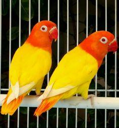 GORGEOUS COLORFUL BIRDS