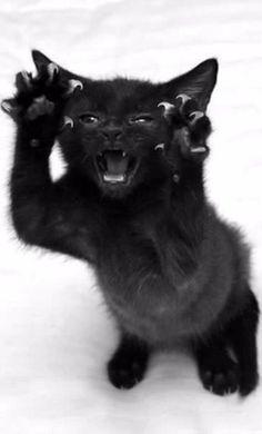 """I'm not cute! Look at me, I'm a ferocious killer, RARRR!"" Nope. Still cute."