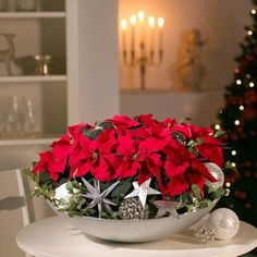 "Am 12. Dezember ist ""Poinsettia Day"""