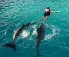 Swimming with the dolphins- Nassau Bahamas