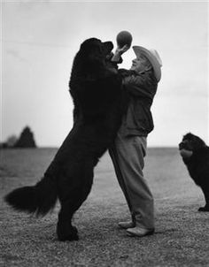 The time you get with your Newfie will undoubtedly be the best time you have with a true friend and companion. A Newf will change your life.