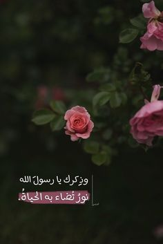 152 Best Arabic quotes images in 2019