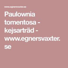 Paulownia tomentosa - kejsarträd - www.egnersvaxter.se