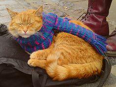 Streetcat Bob by D BYRNE