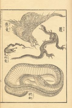 Japanese Drawings, Japanese Painting, Japanese Prints, Japan Illustration, Japanese Mythical Creatures, Art Occidental, Japanese Monster, Snake Art, Monsters
