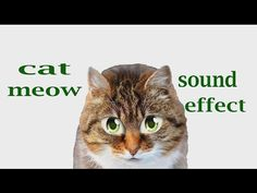 The Animal Sounds: Cat Meow - Sound Effect - Animation
