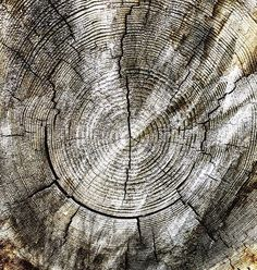 Tree rings  #ilovenature #pnwexplored #lowell #pnwonderland #pnwcollective #fallcreek #fallcreekoregon #oregonexplored #oregonnw #oregonlife #oregongrown #oregonphotographer #oregonlove #oregontrees #treerings #oldgrowthforest #pnw #pnwexplorations #hikeoregon #iloveoregon #bestoforegon #bestofcentraloregon #bofo1k #pnwlife #getoutside #wildernessculture #wanderfolk #woodtexture