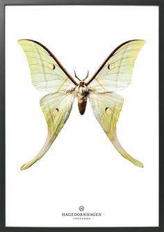 #Poster #butterfly S15 50x70 #Hagedornhagen