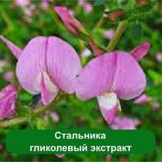 Стальника гликолевый экстракт - природный антисептик, 1 литр