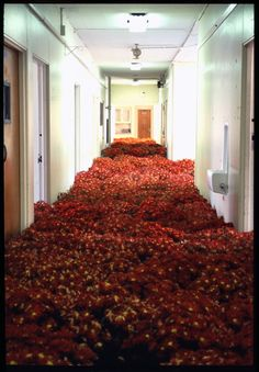 In artist Anna Schuleit was commissioned to create a massive public art installation called Bloom at the Massachusetts Mental Health Center (MMHC) which was slated for demolition. Land Art, Massachusetts, Instalation Art, Mental Health Center, Psychiatric Hospital, Flower Installation, Colossal Art, Wow Art, Public Art