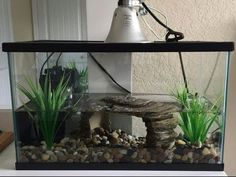 Your big tortoise is a source of pleasure to you. You bought the turtle so you can have more fun with family members and friends. Aquatic Turtle Tank, Turtle Aquarium, Aquarium Set, Aquatic Turtles, Aquarium Ideas, Turtle Cage, Turtle Pond, Pet Turtle, Yellow Bellied Slider