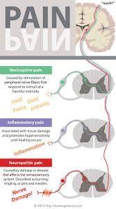 neuron infographic - Buscar con Google