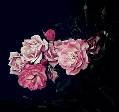 Luster NYC suggested I check out Graham Lott's Rose series of photographs. And they were spot on — I love them.