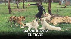Eduardo Serio creó en 2014 la fundación 'Jaguar Negro, Tigre Blanco' para dar…
