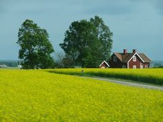 My morfar grew up on a farm that his father managed in this province.  Östergötland, Sweden, fields and farmhouse