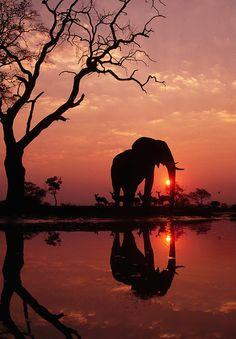 "nubbsgalore: "" photos by franz lanting in botswana's okavango delta """