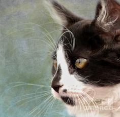 Title  The Ships Cat   Artist  Linsey Williams   Medium  Photograph - Photography