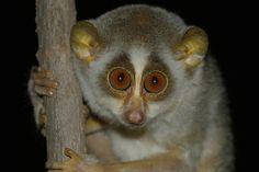 Google Image Result for http://mdb8.ibibo.com/01053616c7465aab211645f5f035c6fed262b497b1c45783ea9b1d2bfc634234effad8483e46f0701200894c0a9a2756eda2f95b9.jpeg/zoo-animal-eyes-look-dark.jpeg