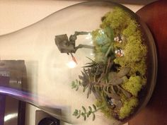 My Star Wars terrarium.