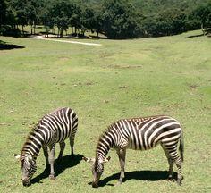 Serengeti Safari en Bioparque Estrella