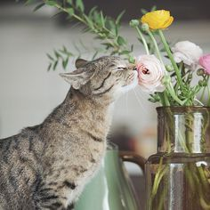 Purrfect Gift Ideas for Cat Lovers! Pretty Cats, Beautiful Cats, Animals Beautiful, Simply Beautiful, Beautiful Images, Beautiful Things, Cool Cats, I Love Cats, Crazy Cat Lady