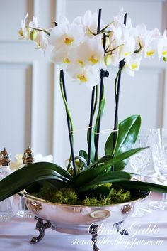 orchids  orchids: day orchid decor