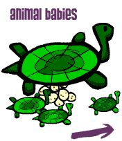 animal babies and reproduction on-line game. Cycle 1 week 7