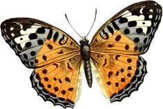 vintage butterfly - Pesquisa Google