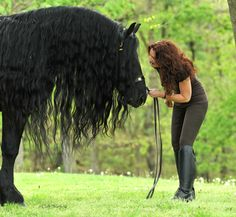 Frederik The Great, a stunning Friesian Stallion with the incredible mane!