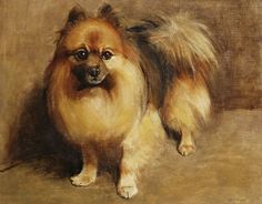Portrait of a Pomeranian by Samuel Fulton | Art Posters & Prints