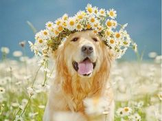 13 Pups Proving April Showers Do Bring Flowers