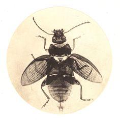 Arthur E. Durham, Photomicrograph of a fly, ca.1865